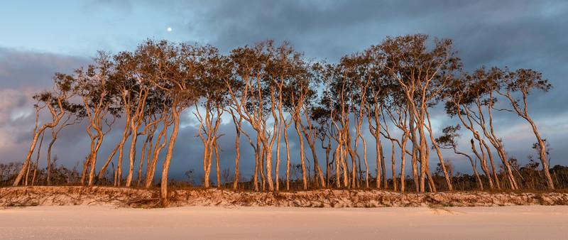 Tea Trees - Wathumba