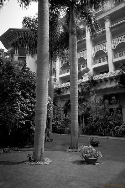 Hotel Trees