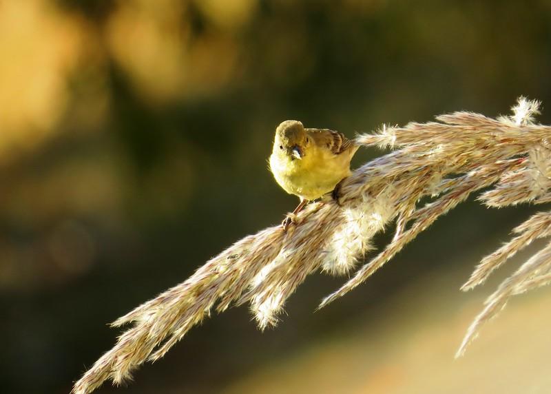 birds (102).JPG