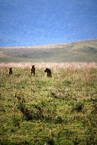 Ngorongoro (57).JPG