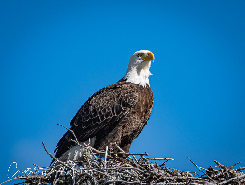 Bald Eagle Causeway 2 121120-.jpg