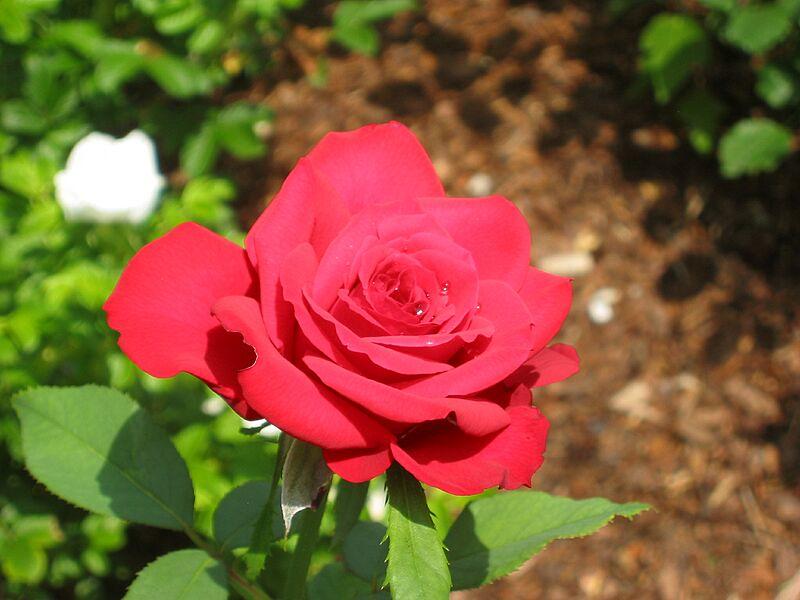 garden-2006-07-0480_std.jpg