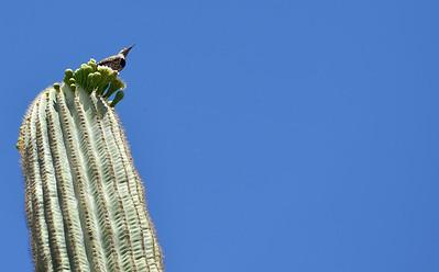 Desert Botanical Garden 04-2014