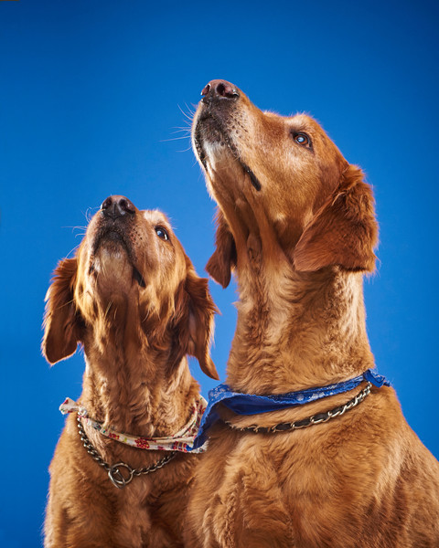 2016_12_24_Christmas Dogs4118.jpg