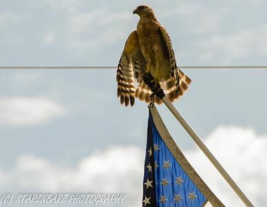 Odessa Hawks