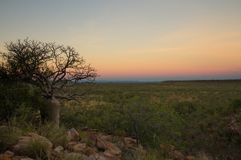 Genevieve Hathaway_The Kimberley_Gibb River Road_Bell Gorge_sunrise boab_3.jpg