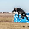 Disc dog fun - Saturday, March 28, 2015 - Frame: 3149