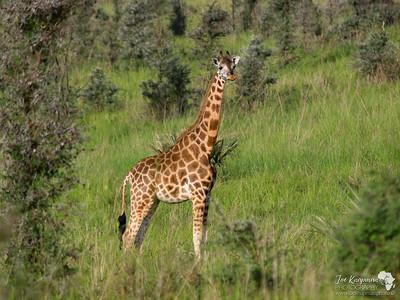Female in Murchison Falls National Park