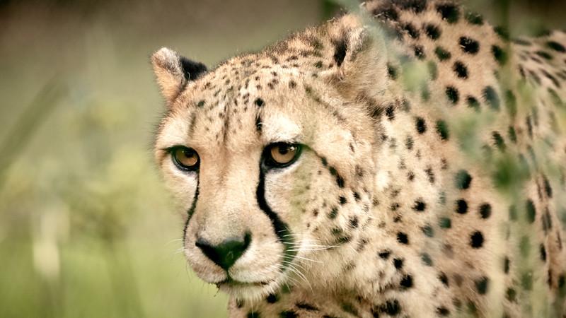 20181030 - Houston Zoo-DSC_0799.jpg