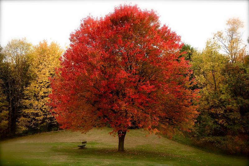 Foliage 07-4.jpg