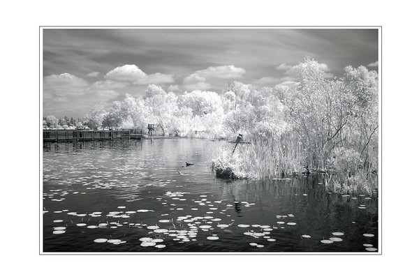 Near IR Photography
