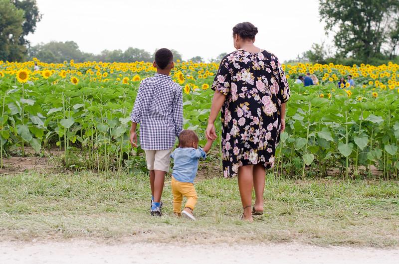 SuzysSnapshots_Sunflowers_Brittany-6271.jpg
