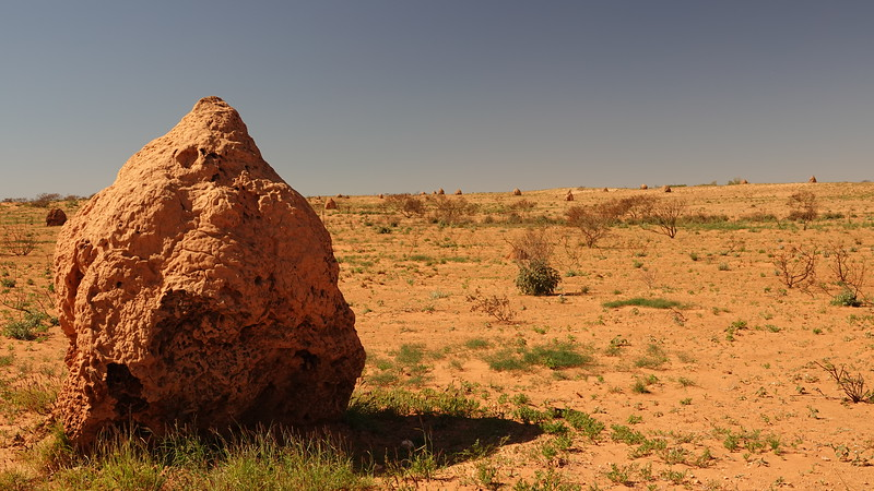THOUSANDS OF TERMITE MOUNDS ON THE WAY TO EXMOUTH