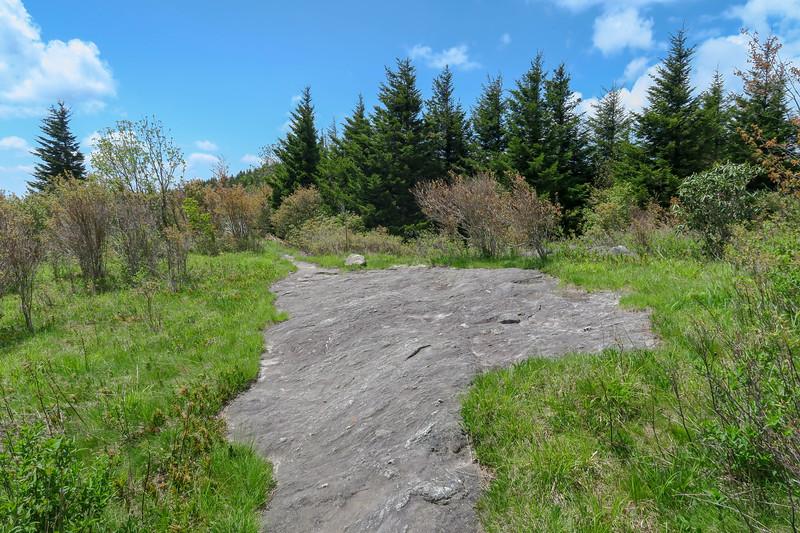 Mountains-to-Sea/Art Loeb Trail -- 5,910'