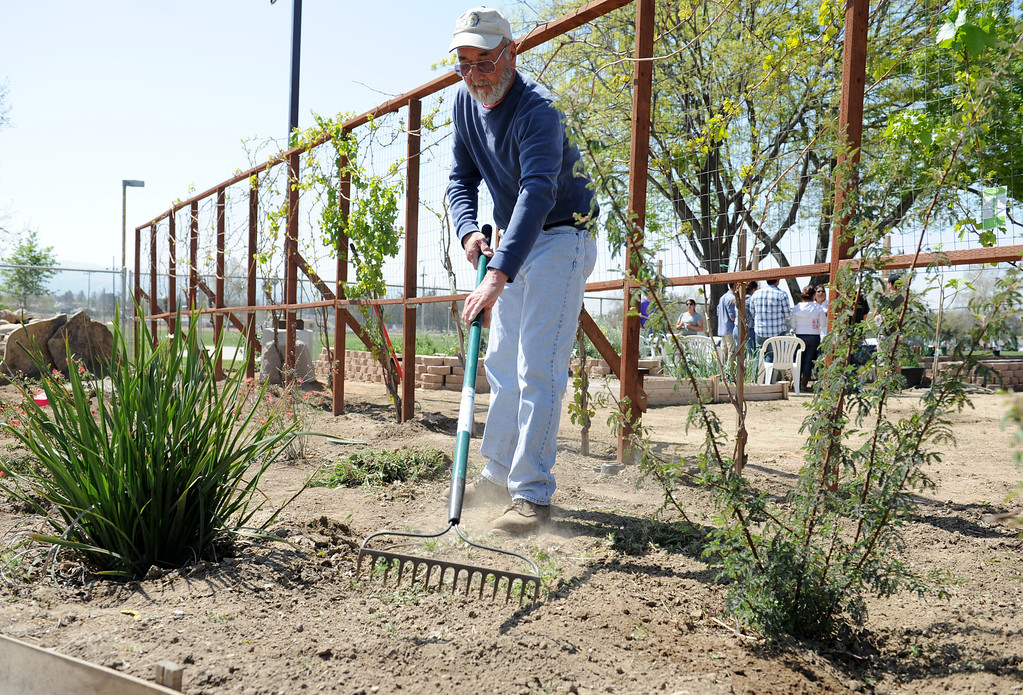 . (John Valenzuela/Staff Photographer) Veteran Lloyd Williams work in the Disabled American Veterans Garden, Saturday, at Speicher Park in San Bernardino, March 23, 2013.