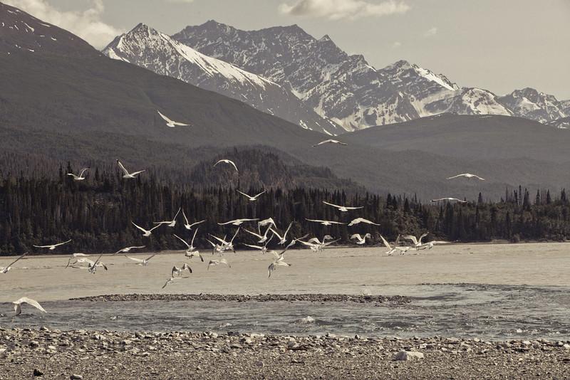 Alaska Copper River-8235.jpg