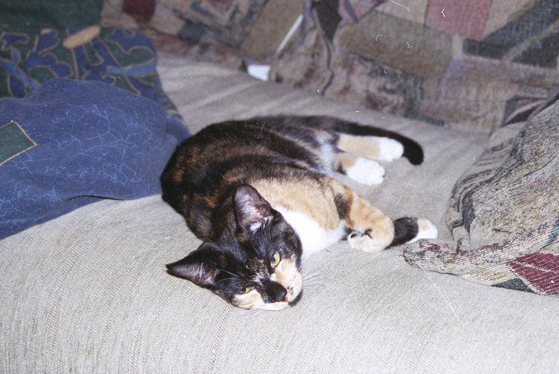 2003 12 - Cats 06.jpg
