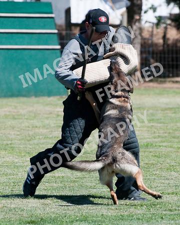 Dogstock2010