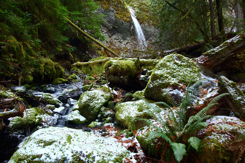 Whale Creek Falls, Clackamas Wilderness Area