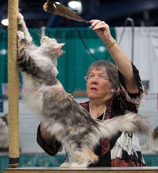 CatShow2014033_1.jpg