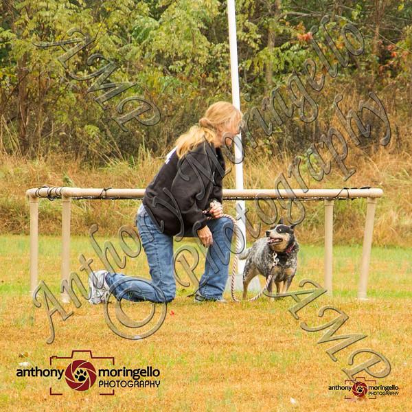 dirtydog_0034-50079.jpg