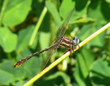2013 LWC Dragonfly Trip