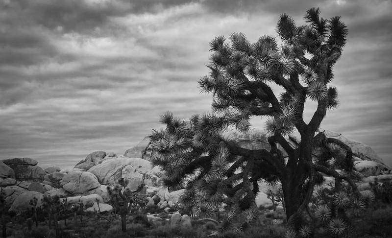 Joshua Tree-4766.jpg