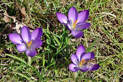 Kansas City Flowers