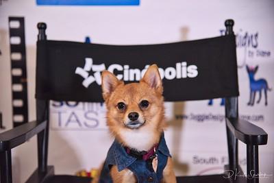The Canine Film Festival - November 2017