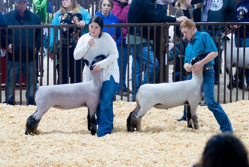 kay_county_showdown_sheep_20191207-79.jpg