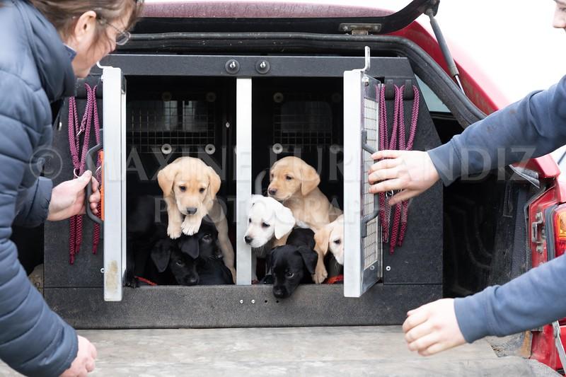 Weika Puppies 24 March 2019-8748.jpg
