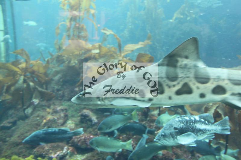 Aquarium 20118.jpg