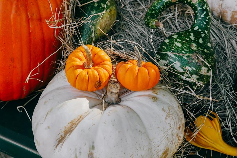 assorted pumpkins 3 (1 of 1).jpg