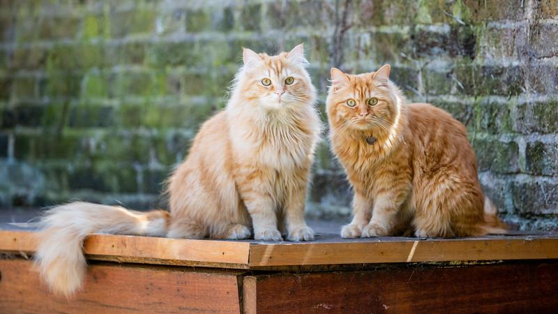 Alan and Ron-97.jpg