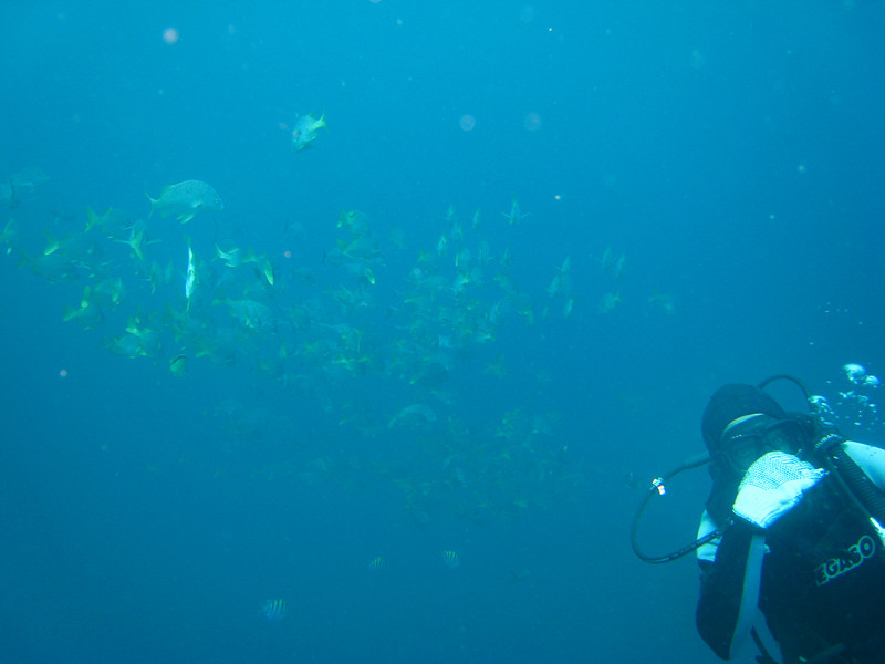 Diving in the Galapagos (328 of 392)