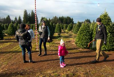 Christmas Tree Hunt 2014