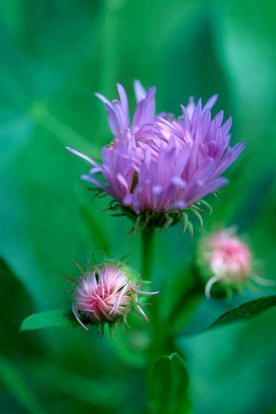 amh FLOWERS (1159).jpg
