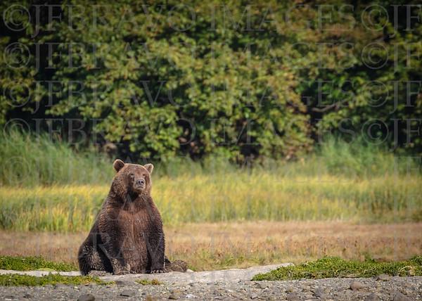 Awesome Alaska!