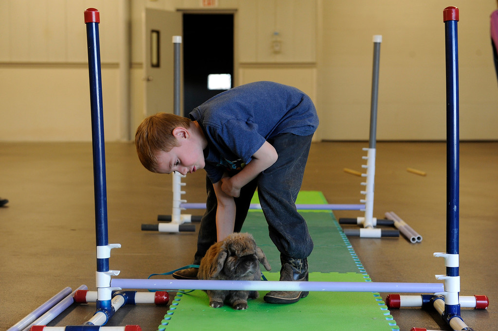 . BRIGHTON, CO - MARCH 25: Kyle Stephens, 6, prods his rabbit, Jeeves, to try and get him to hop over a jump at the Adams County Fairgrounds Event Center on March 25, 2014, in Brighton, Colorado. Stephens is part of the Adams County Rabbit Hopping group, which is made up of eleven youngsters who participate in 4-H projects through Adams County. They are training for the Adams County Fair which will take place at the end of July. (Photo by Anya Semenoff/The Denver Post)