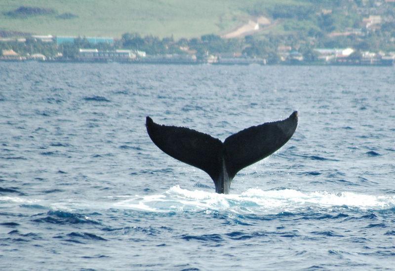 whaletail 25.jpg