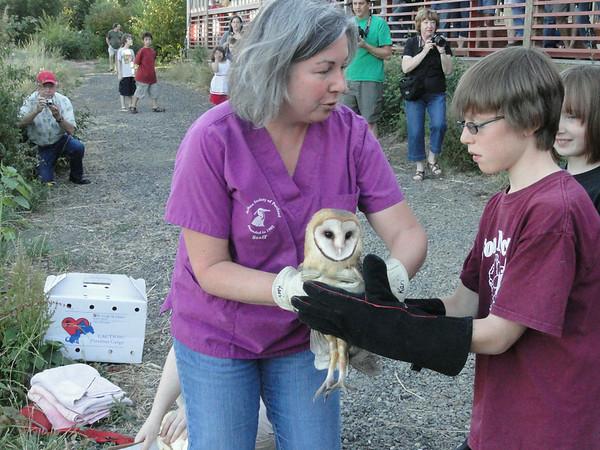 Four Barn Owls Rehabbed Now Released Photos