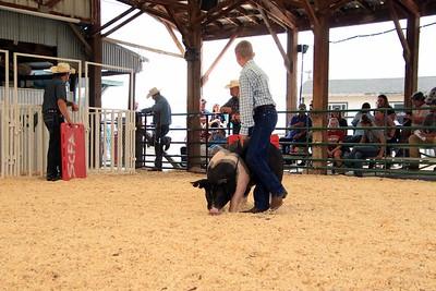 Market Swine 13