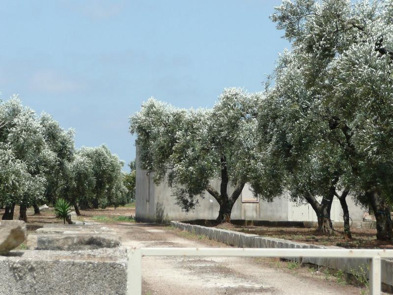 Along the road to Otranto