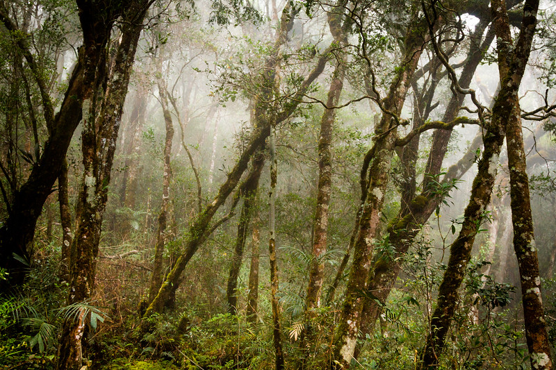 Cloud forest, Mount Kinabalu Borneo