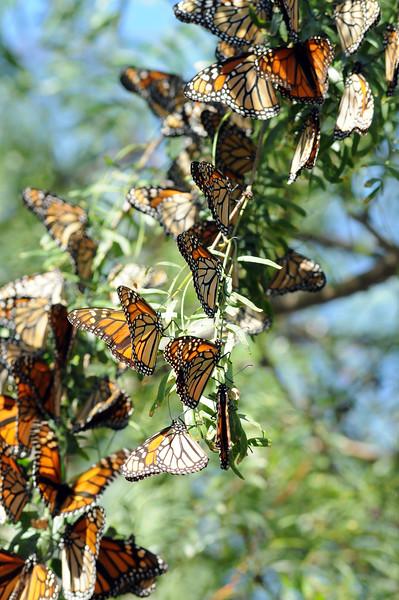 20111019_Nature_092.jpg
