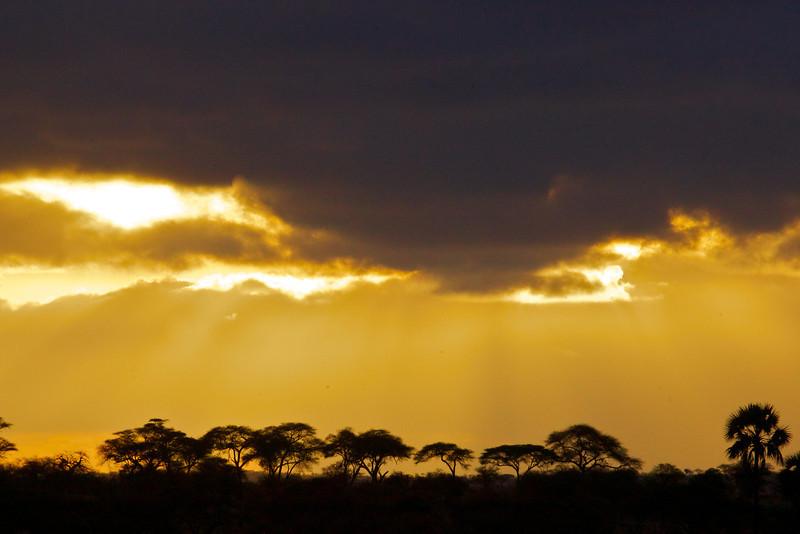 Ngorongoro 21.jpg