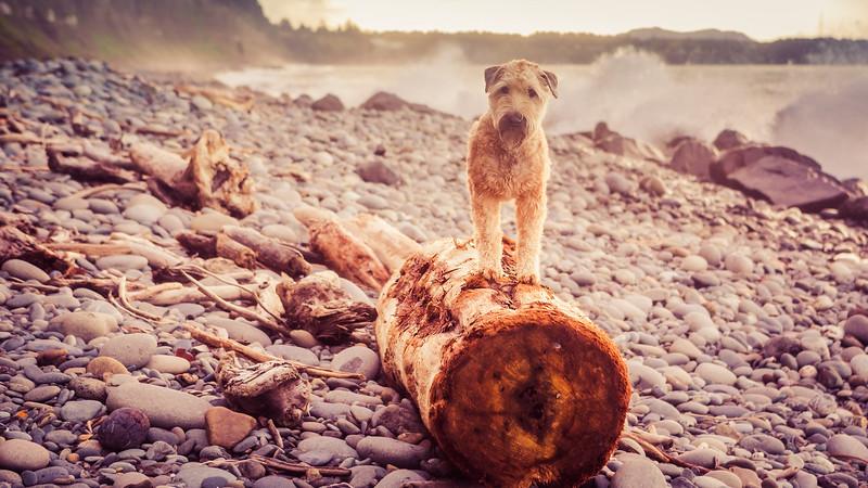 Olive on a log