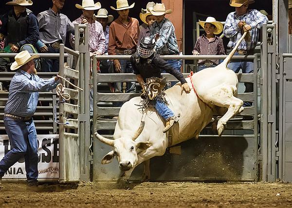 Bull Riding - Norco Fair