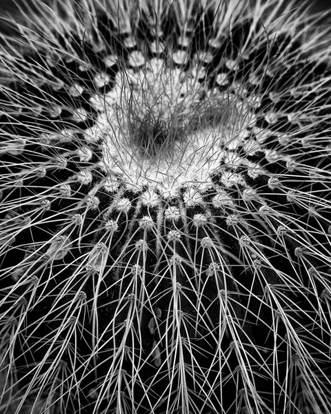 notocactus.jpg