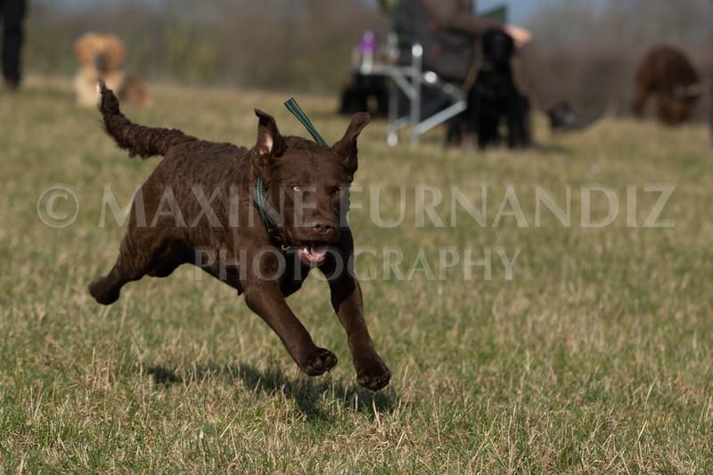 Dog Training Novice GD Feb2019-5856.jpg